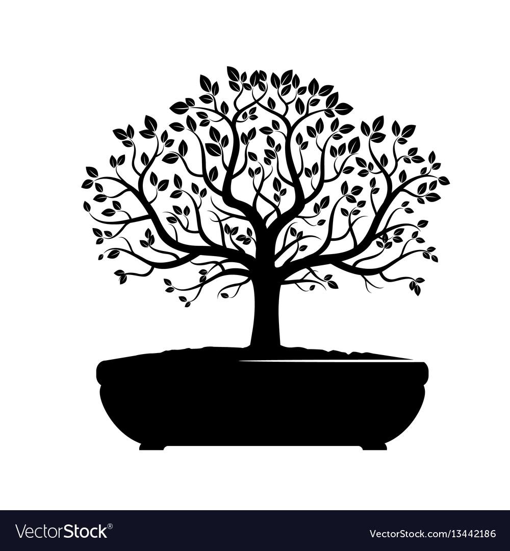 Black bonsai olive tree vector image