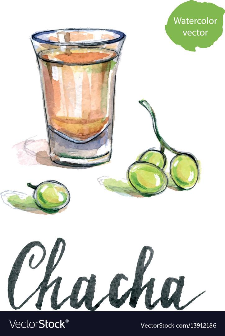 Glass of georgian vodka chacha with grape vector image
