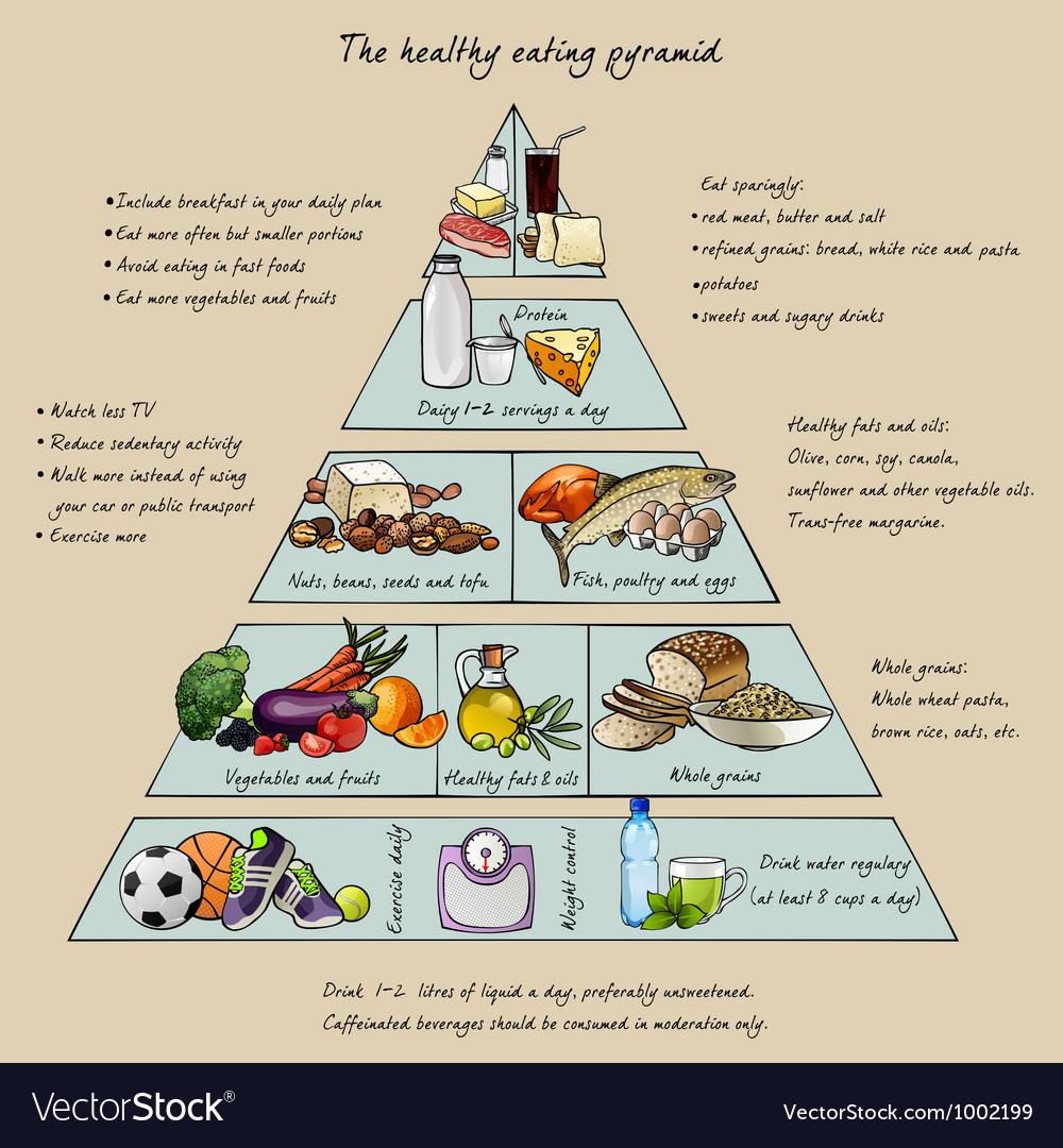 Healthy eating pyramid vector image