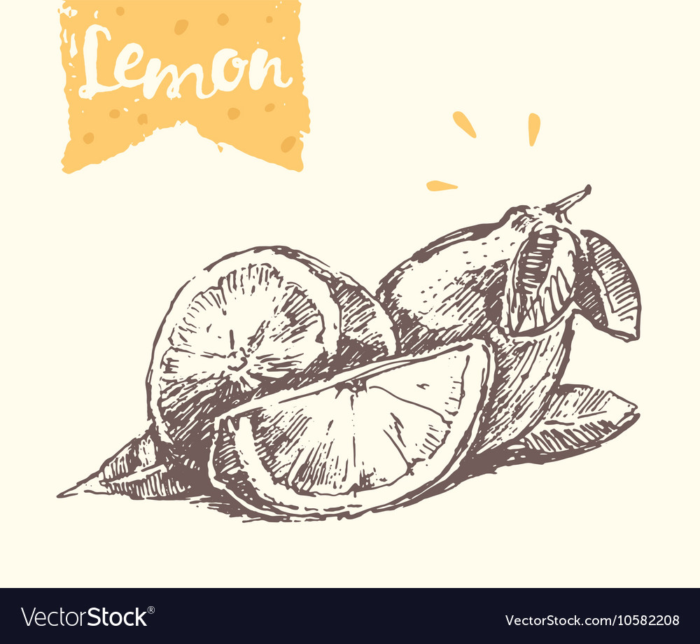 Hand drawn lemon sketch vector image