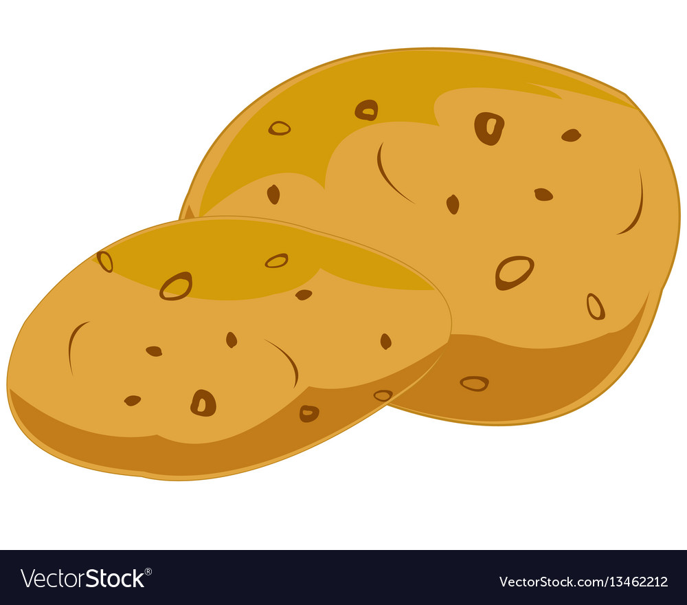 Two potatoeses on white vector image