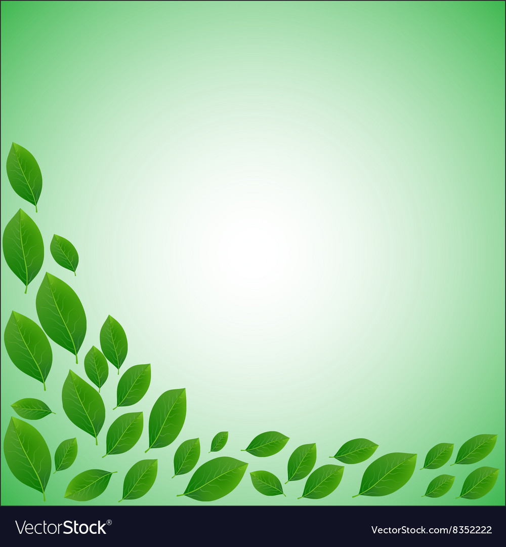 Natural frame for a card of realistic green leaves