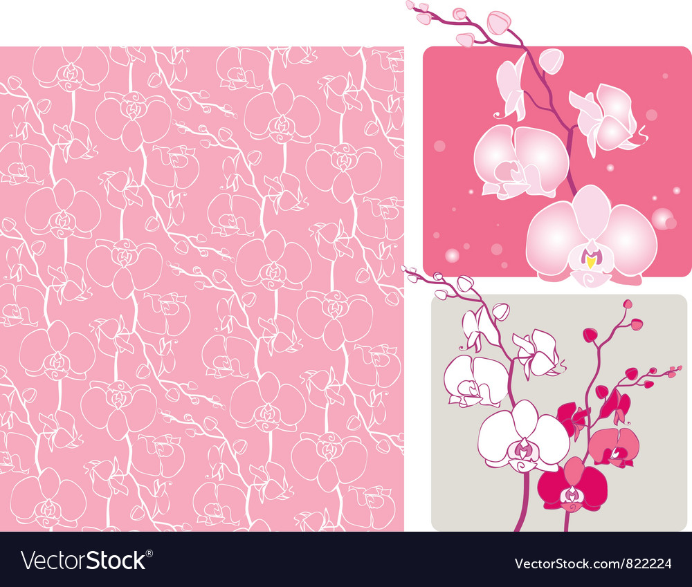 Orchids vector image