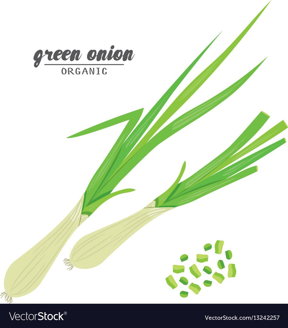 Cartoongreen onion ripe vehetables vegetarian vector image