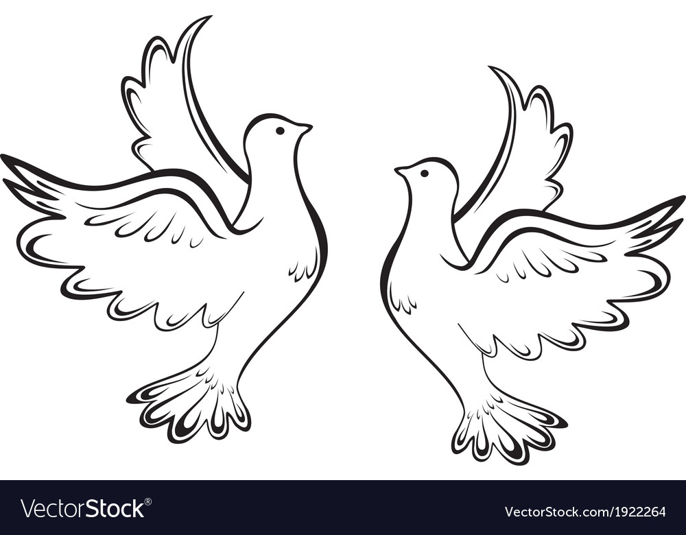 Two dove vector image