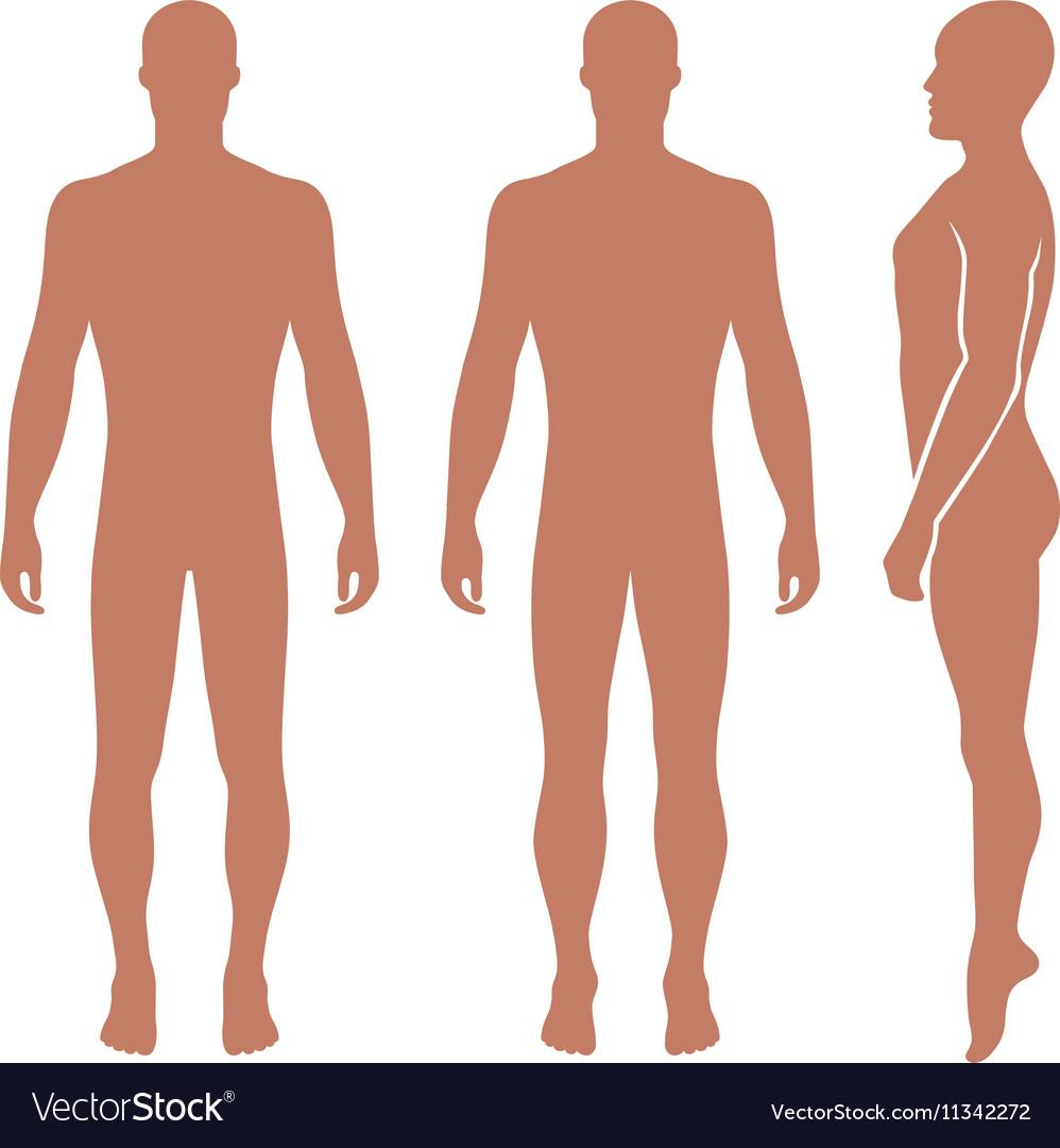 Fashion man full length bald template figure silho vector image