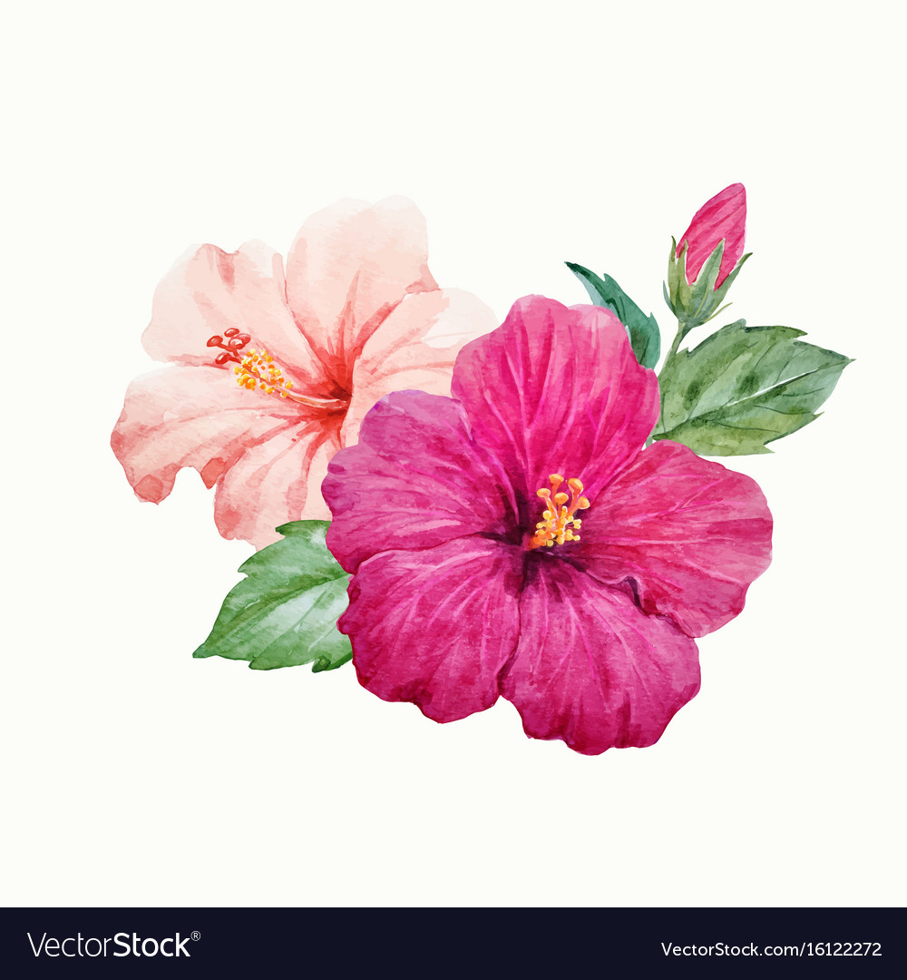 Watercolor tropical hibiscus flower royalty free vector watercolor tropical hibiscus flower vector image izmirmasajfo Gallery