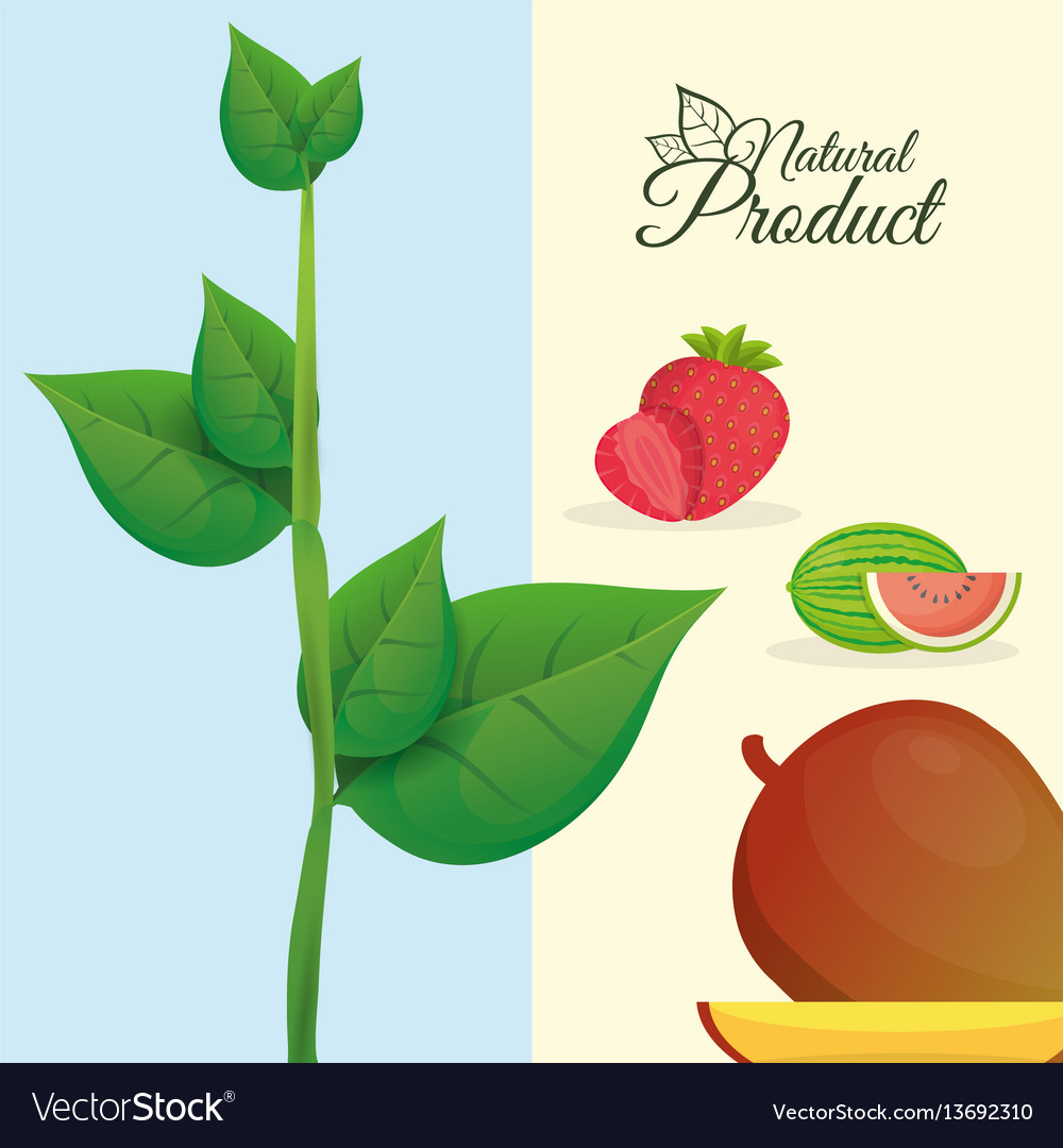 Natural product fruit poster vector image