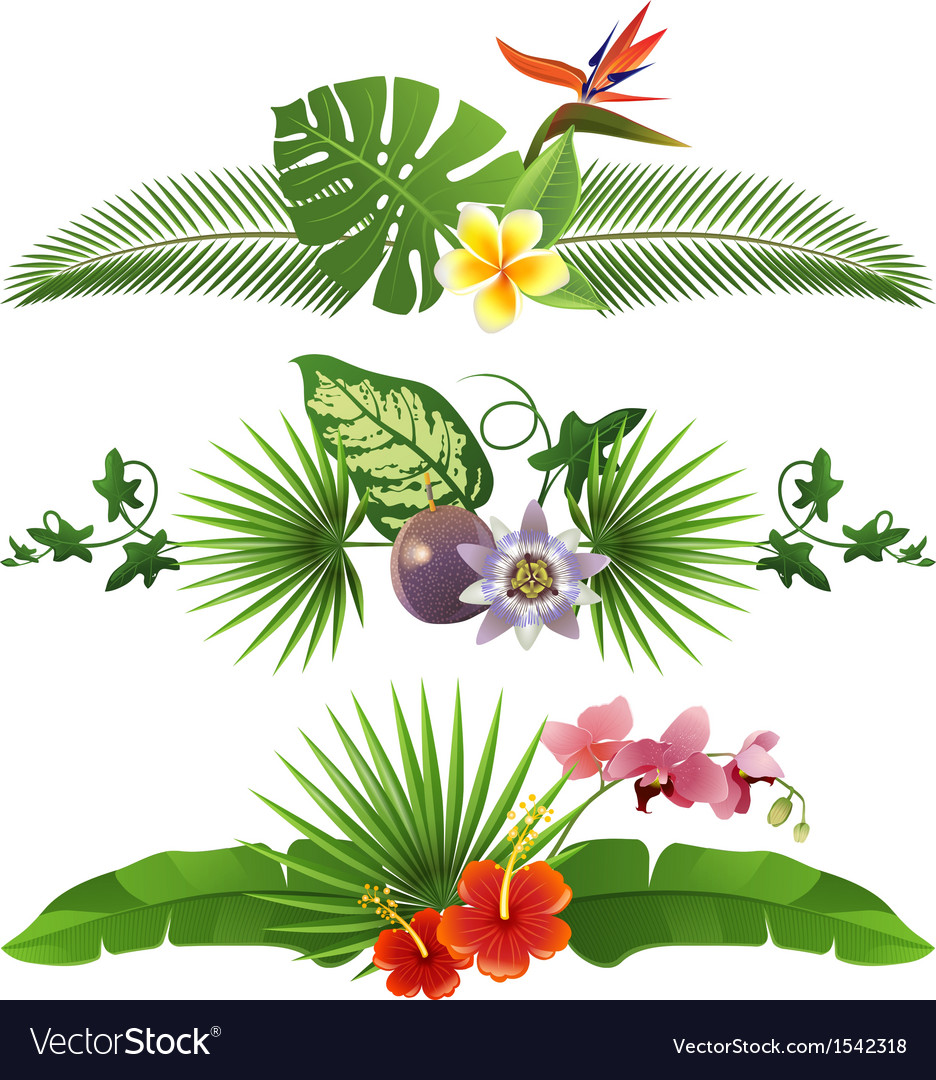 Tropical borders vector image