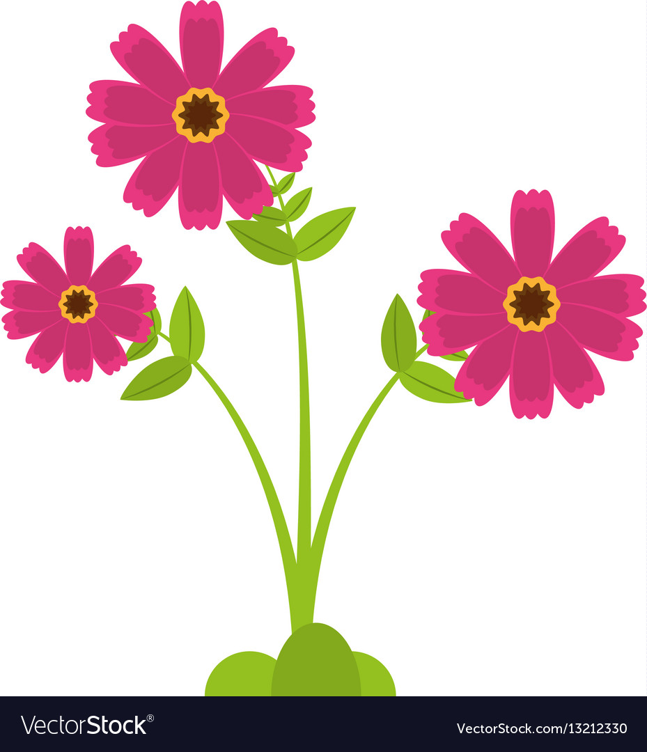 Pink cosmos flower spring icon royalty free vector image pink cosmos flower spring icon vector image mightylinksfo Image collections