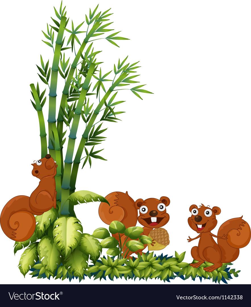 Happy squirrels vector image