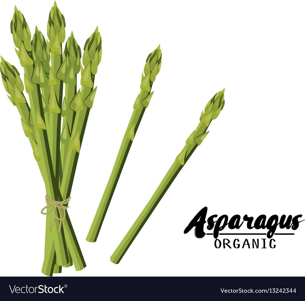 Cartoon asparagus ripe green vegetable vector image