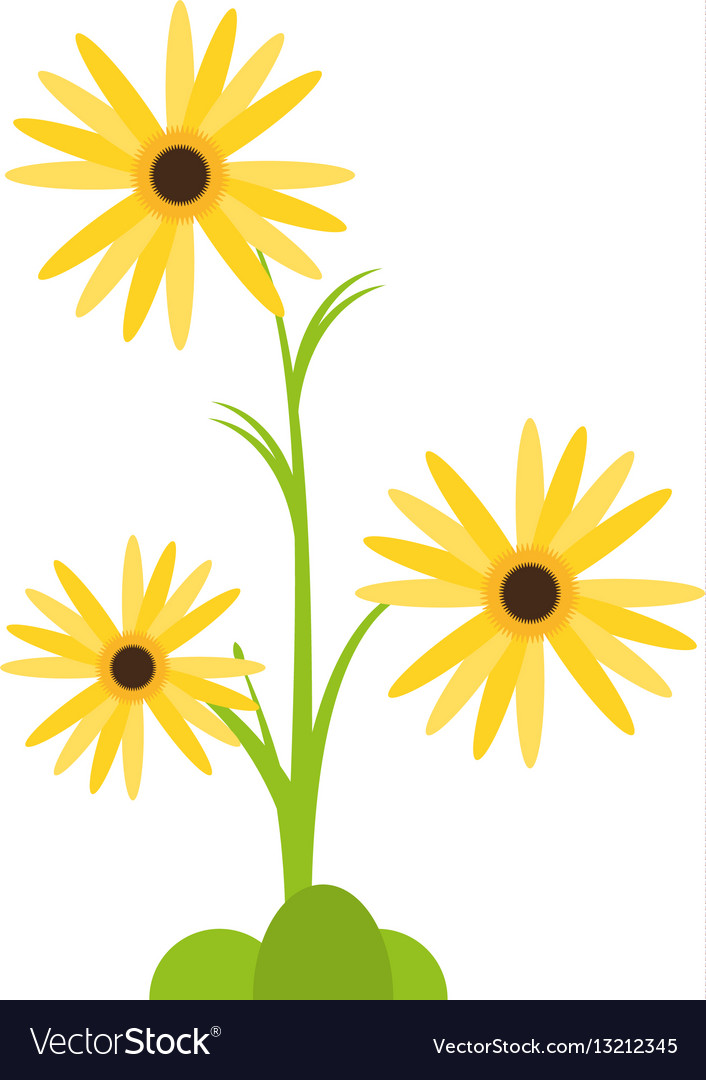 Marigold flower decorative plant vector image