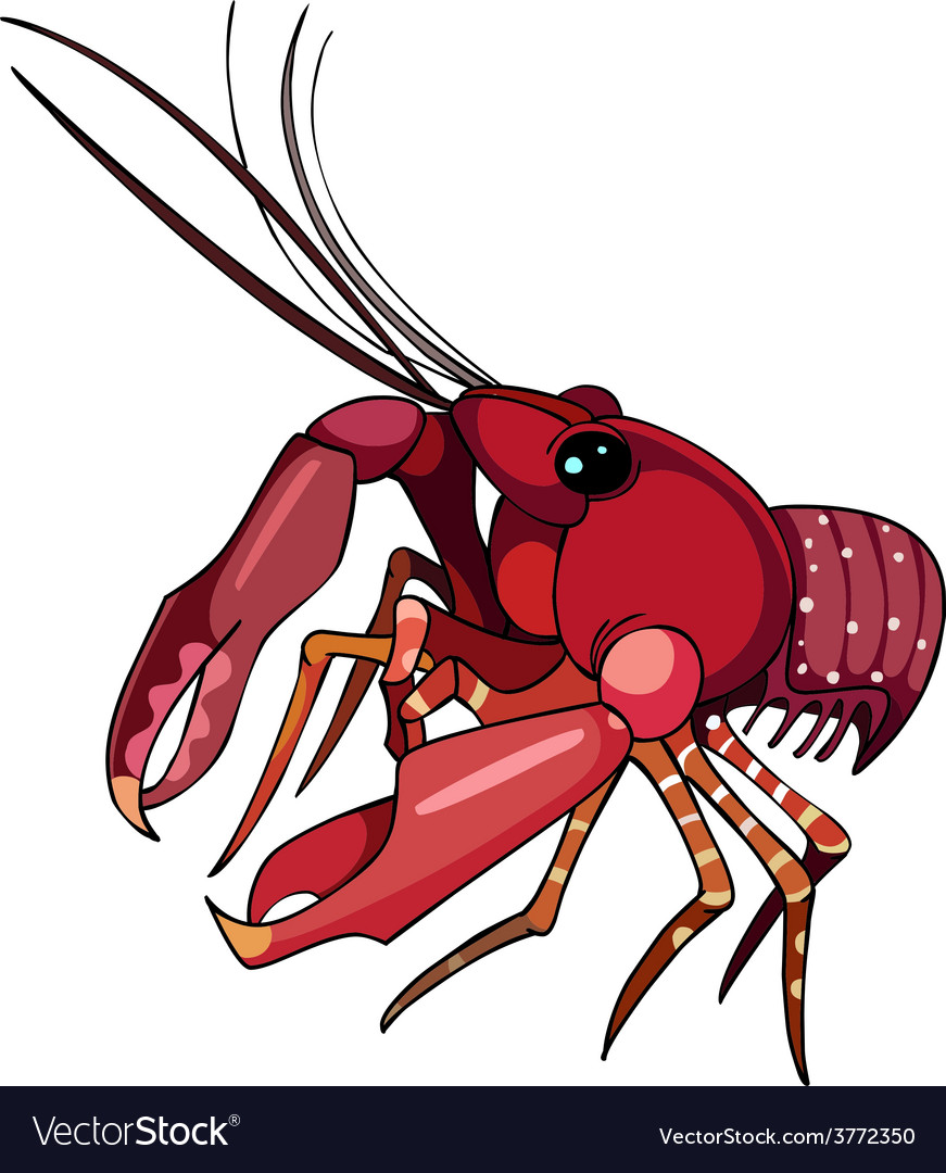 Red lobster cancer vector image