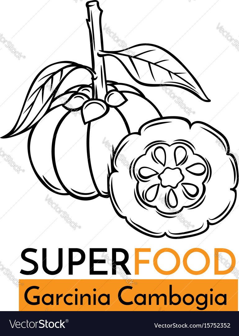Icon superfood garcinia cambogia vector image