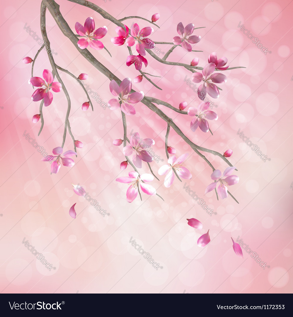 Spring tree branch cherry blossom flowers vector image