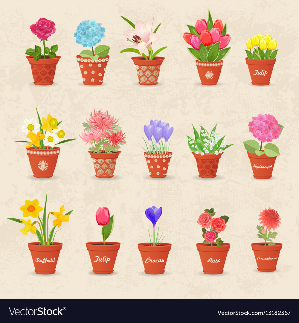 Vintage collection of cute flowerpots with flowers vector image