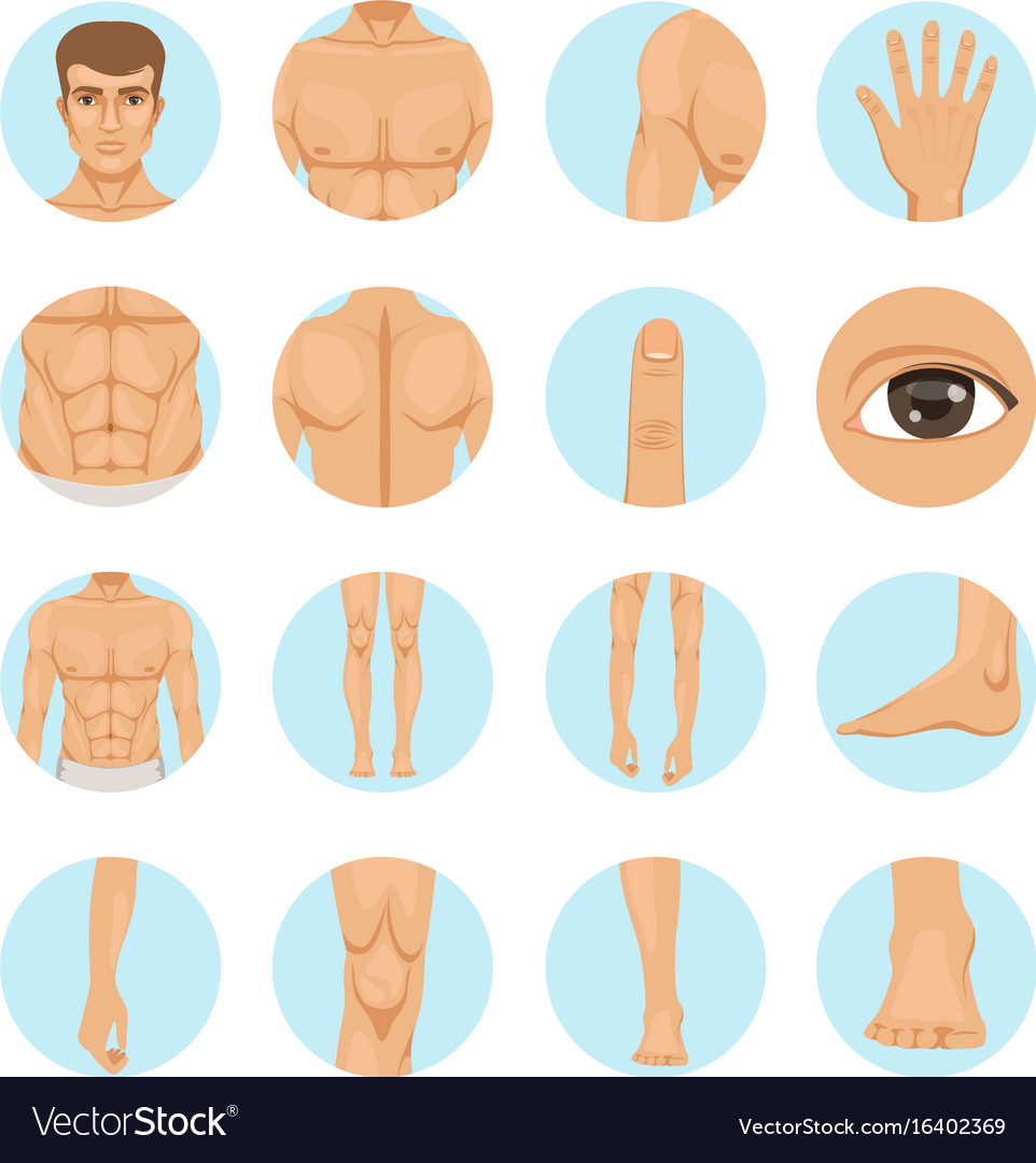 Human Different Parts Of Man Body Royalty Free Vector Image