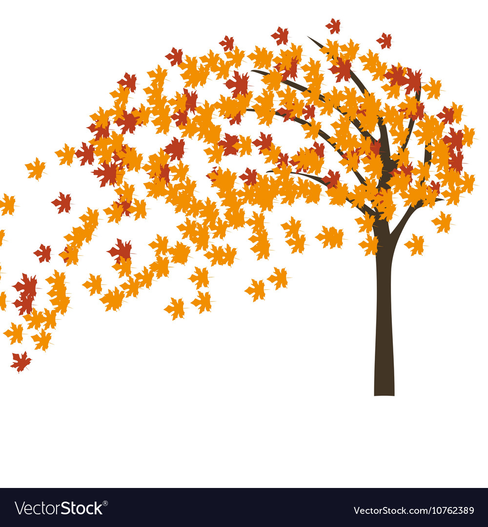 Autumn maple tree in the wind vector image