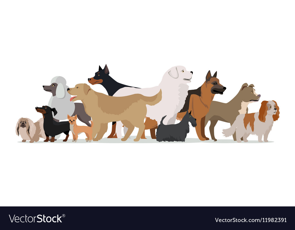 Group of Different Breeds Dogs vector image