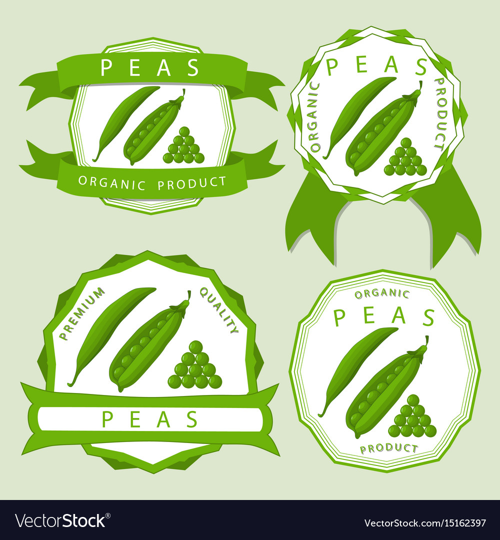 The green peas vector image