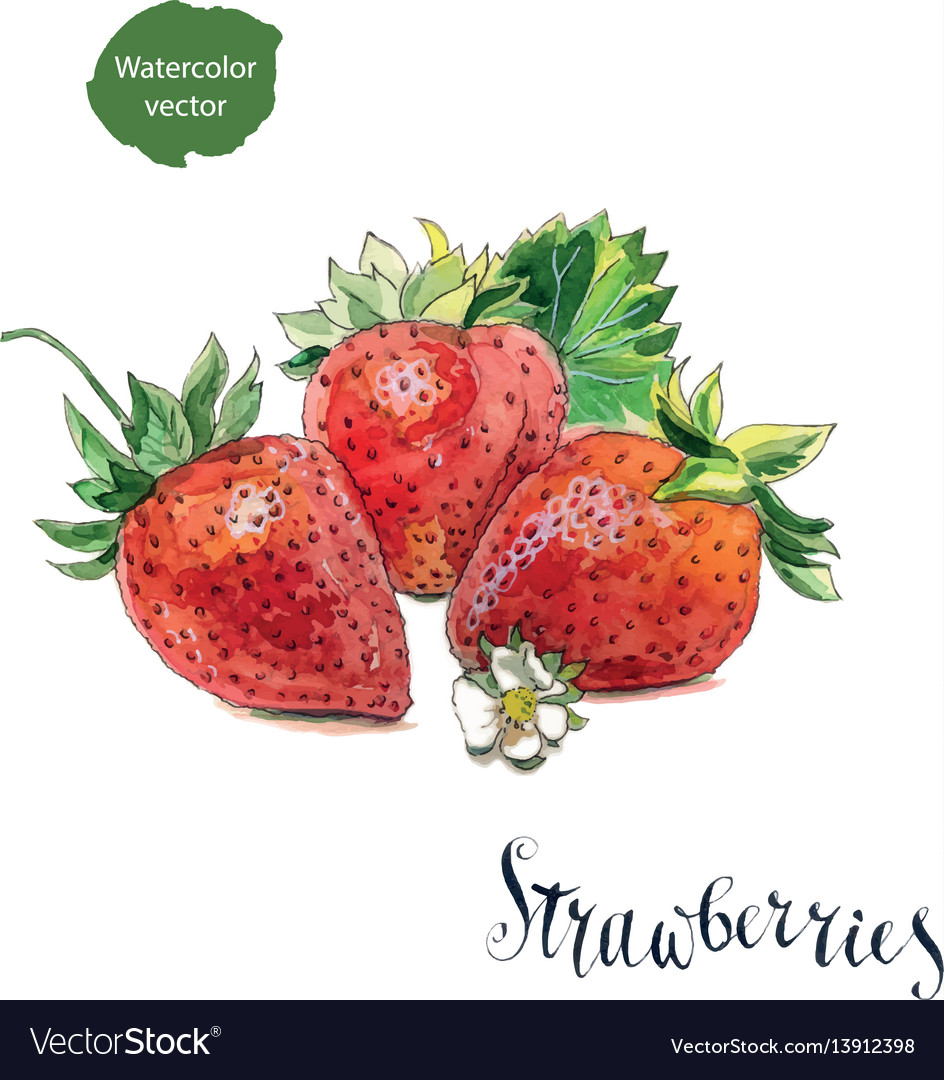 3 fresh strawberries with flower and leaves vector image