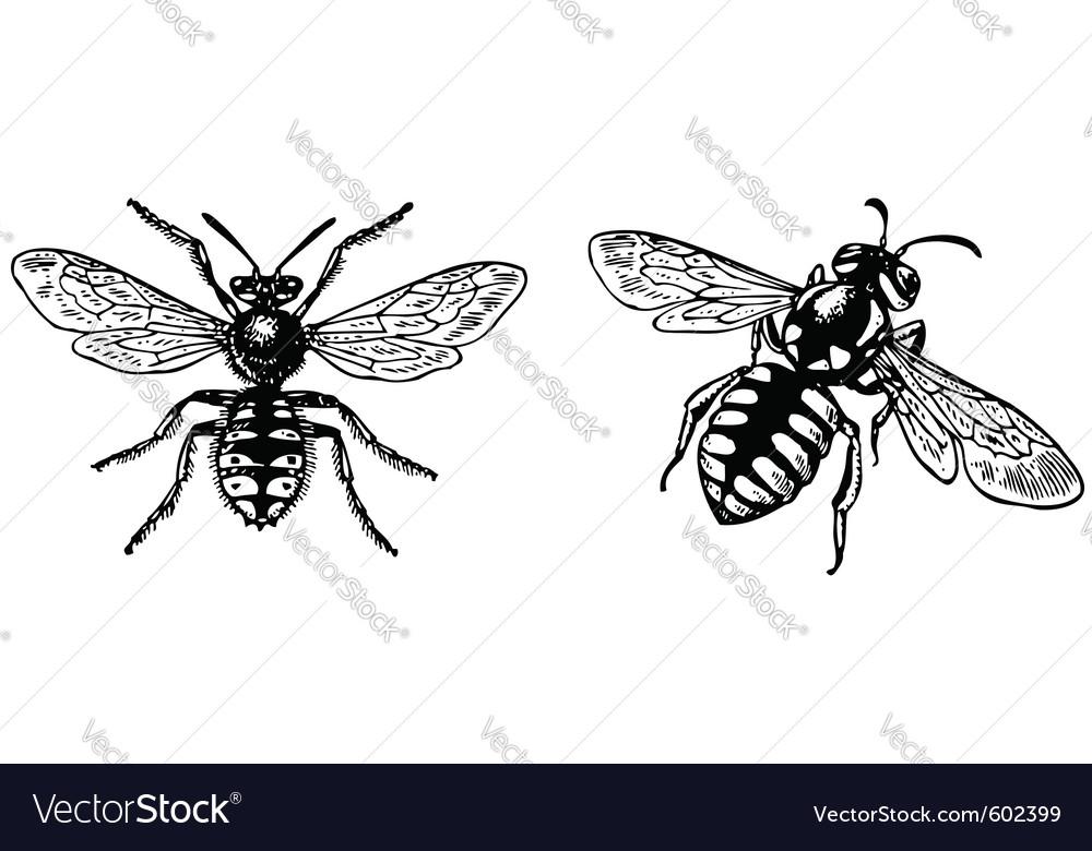 Bug anthidium manicatum vector image
