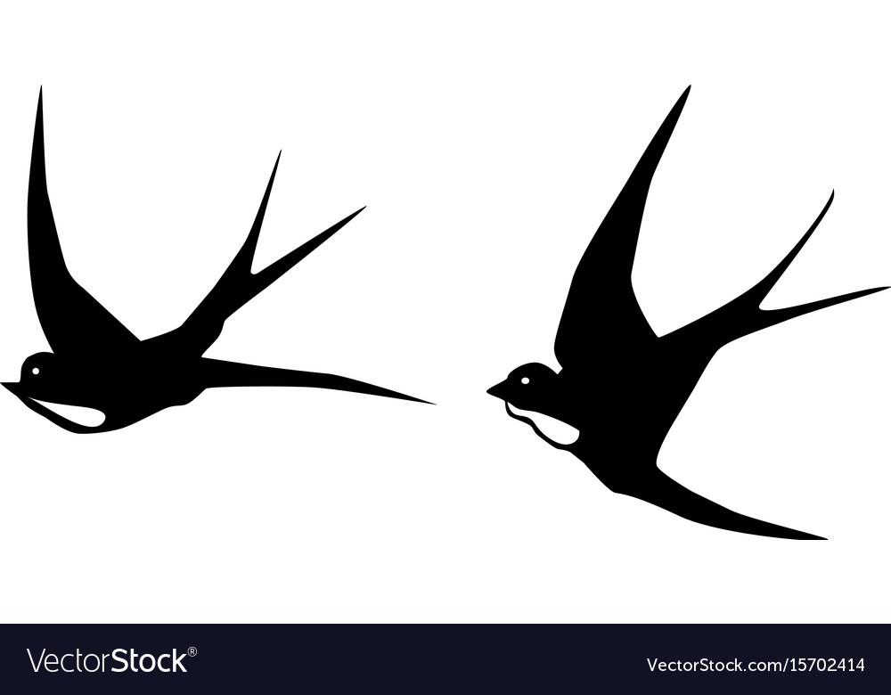 Swallows birds vector image