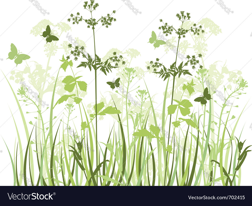 Wildflowers vector image