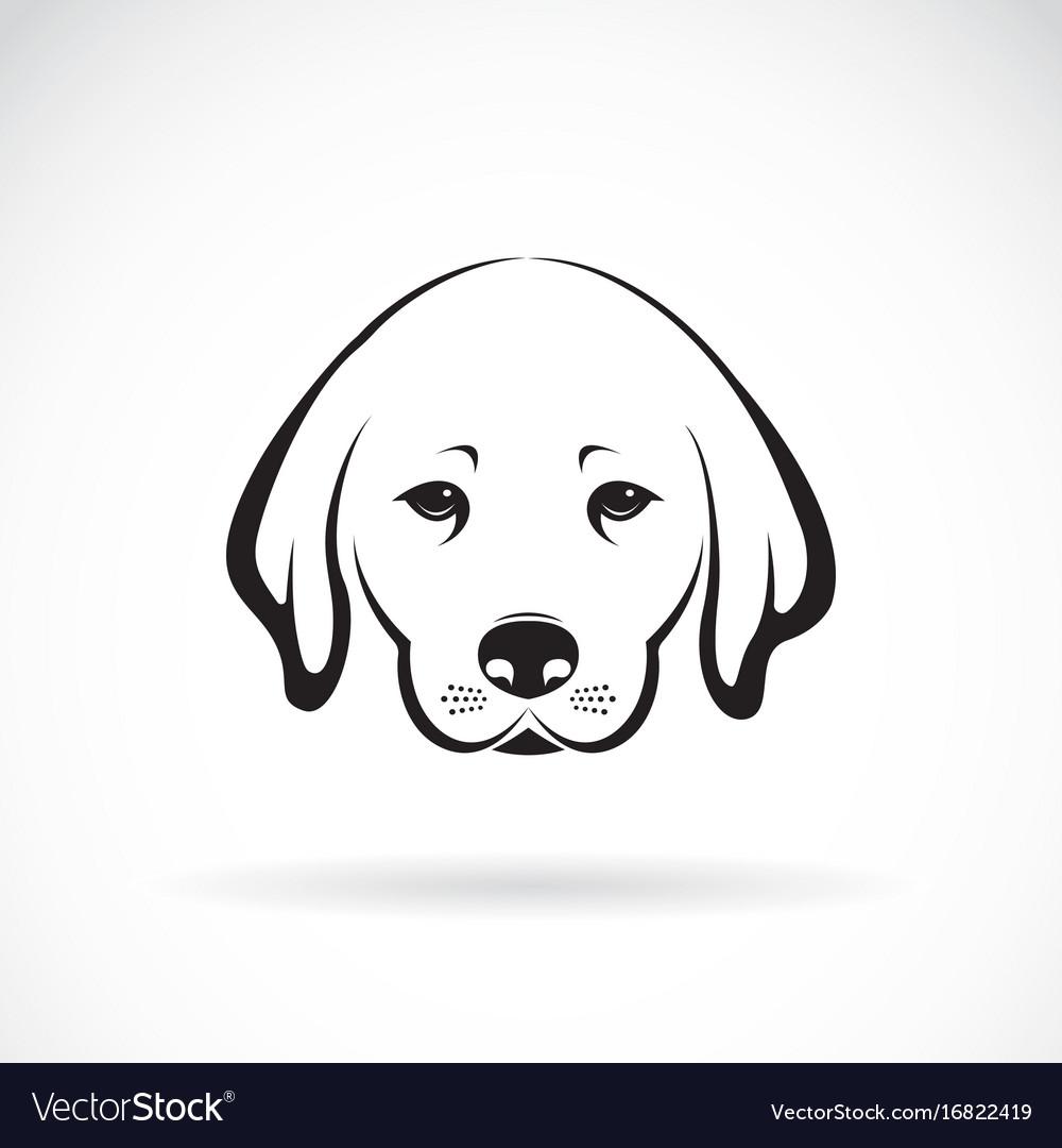 Labrador dog head on white background pet animal vector image