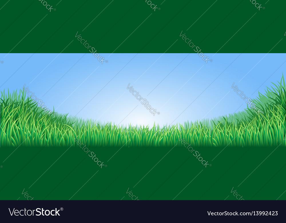 Green grass field vector image