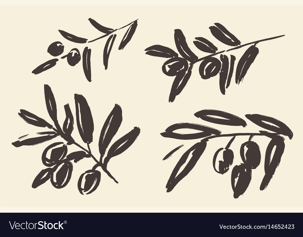 Set ink hand drawn olive tree branches vector image