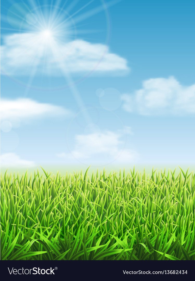 Fresh green grass on the meadow vector image