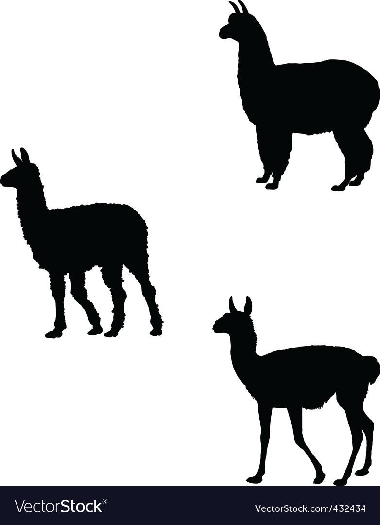 Lama alpaca guanaco vector image
