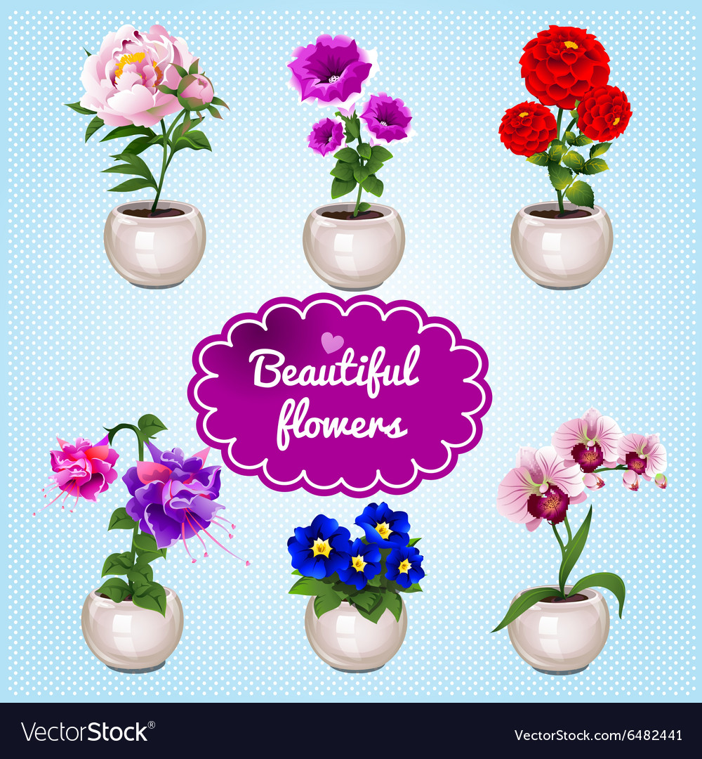 Houseplant in pots on a blue background vector image