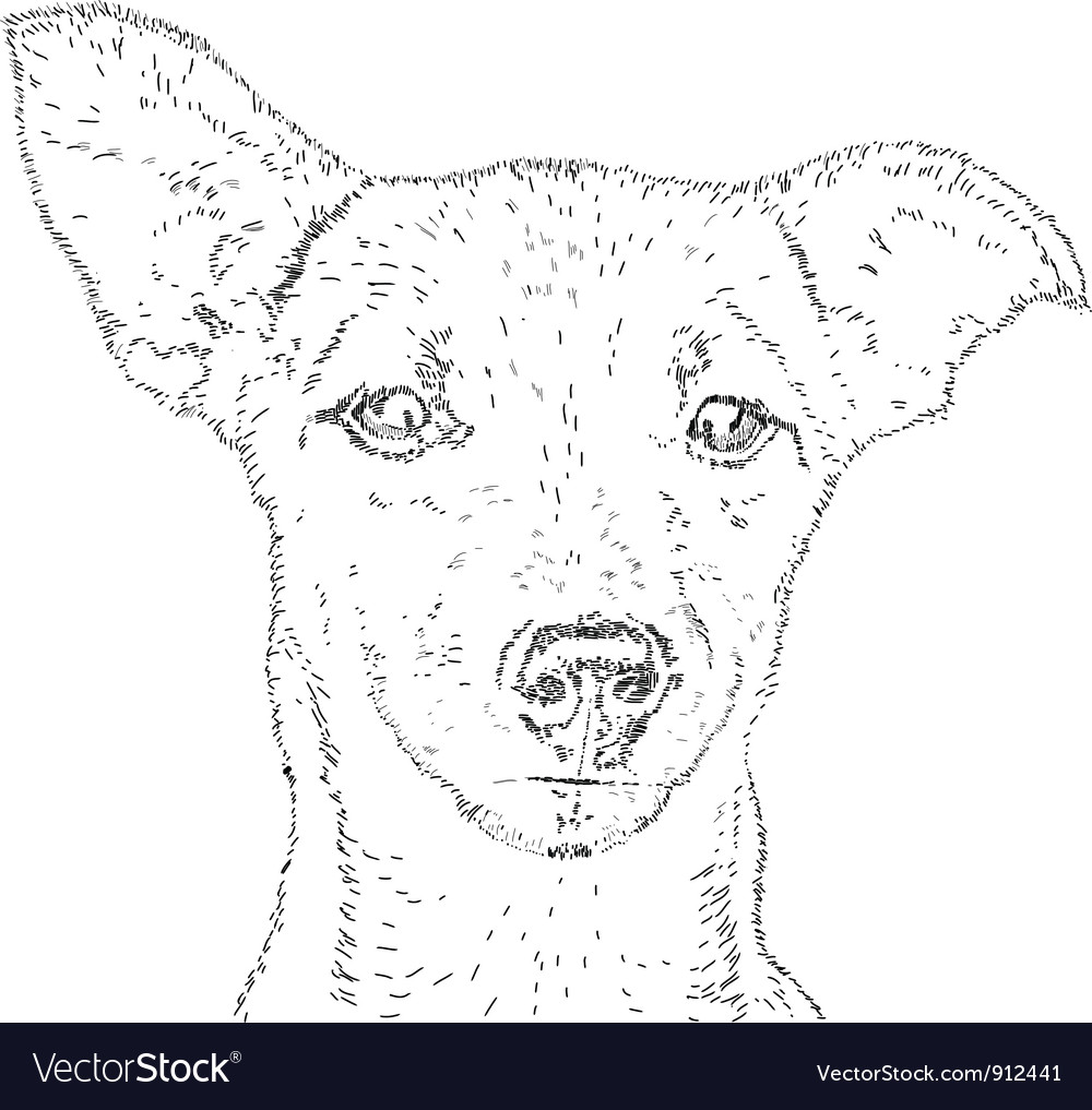 Line drawing dog vector image