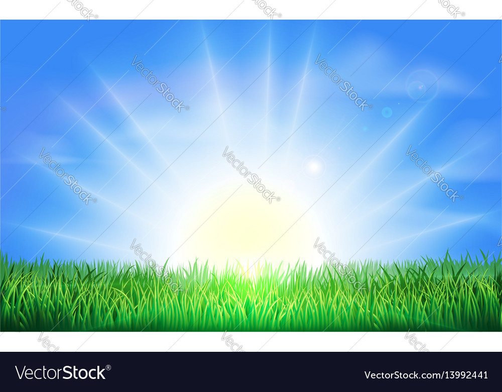 Sunrise over green field of grass vector image