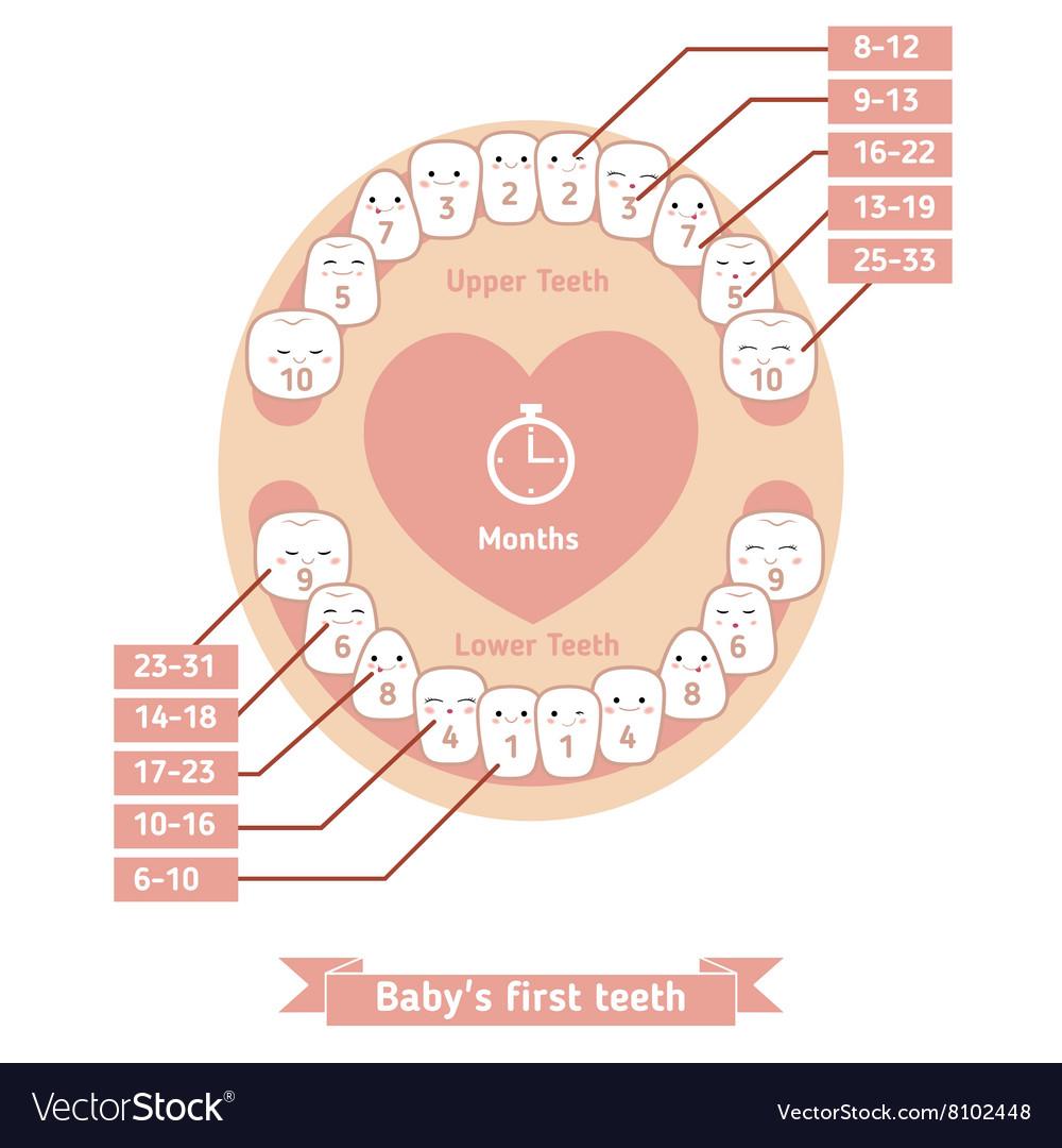 teething chart
