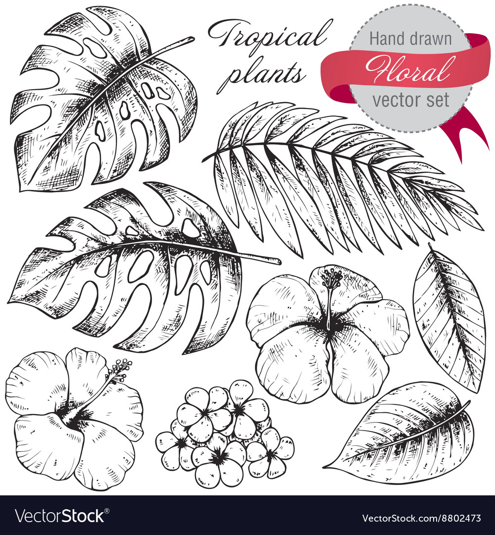 Set of black and white hand drawn graphic tropical vector image