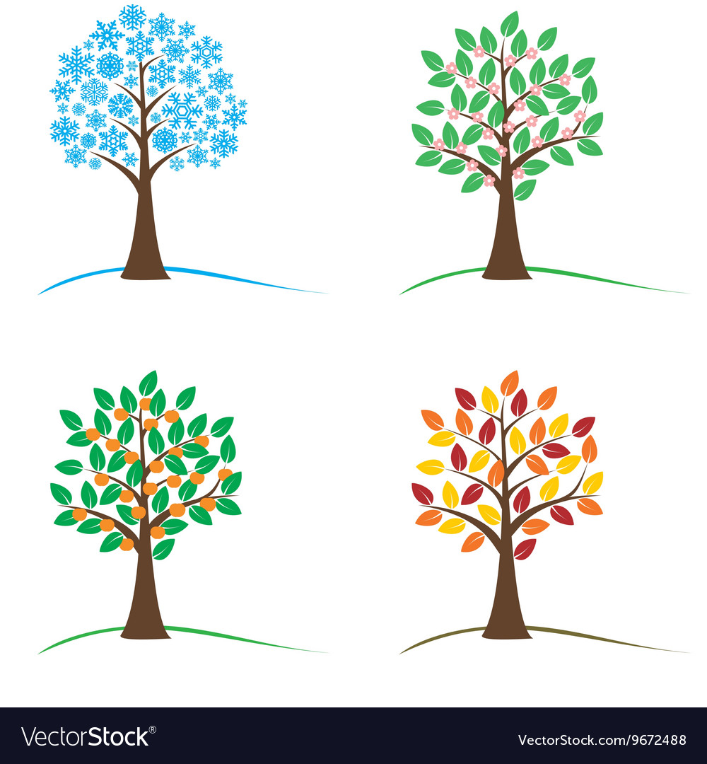 Tree in four seasons - spring summer autumn vector image