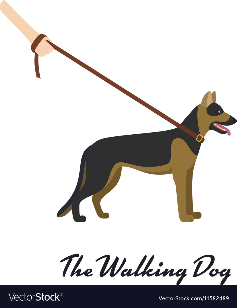 German shepherd with a leash - on white background vector image