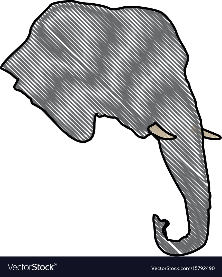 Head elephant wild animal safari african vector image