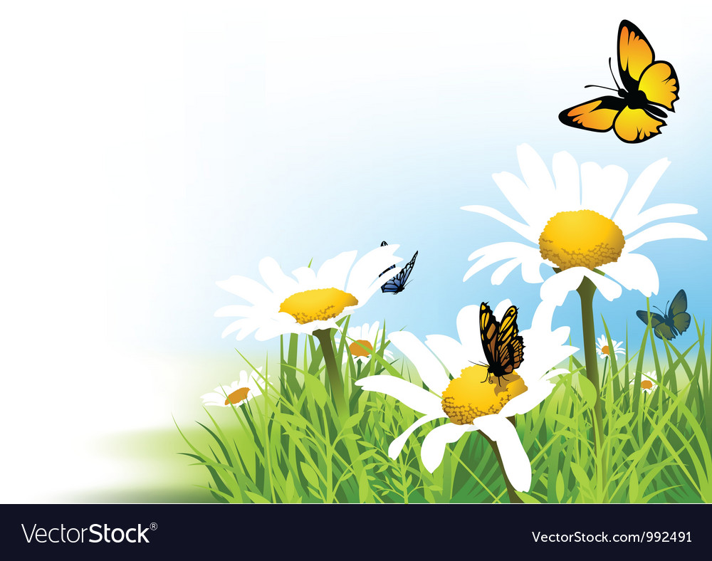 Butterflies and Daisy vector image
