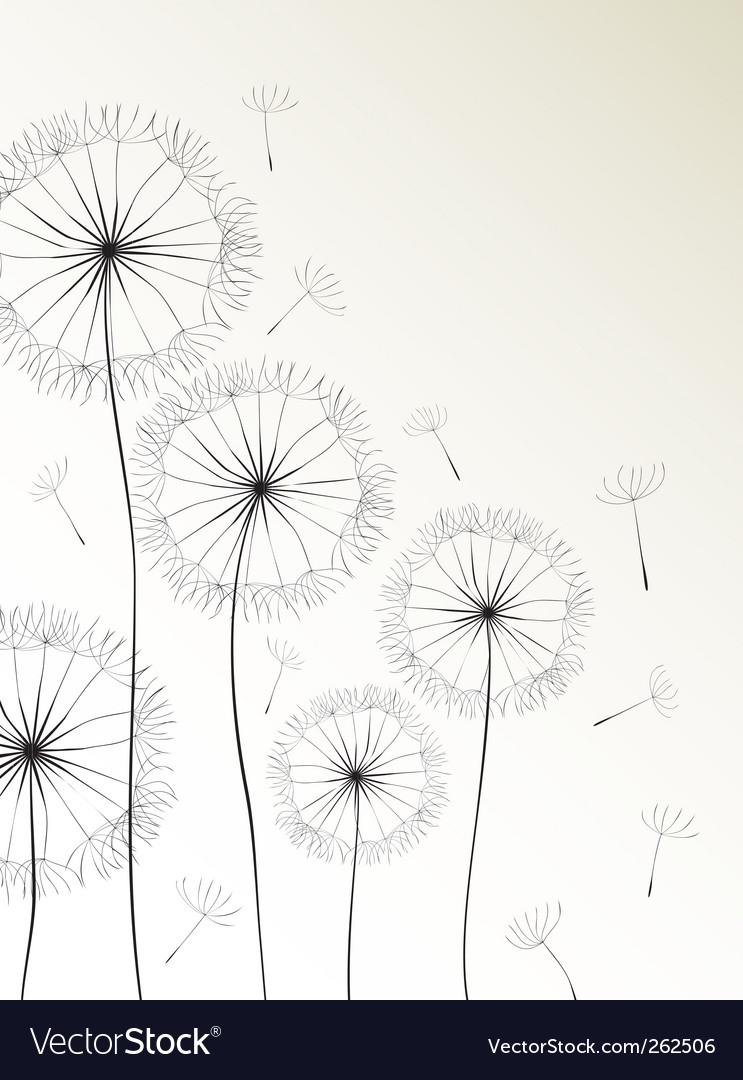 Dandelions card vector image