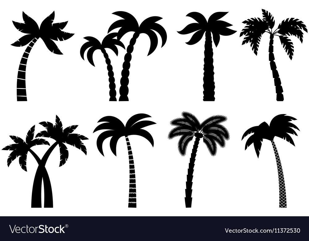 Palm tree black set vector image
