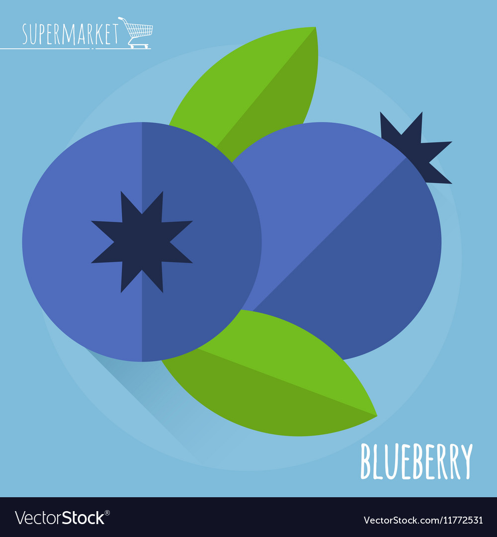 Blueberry icon vector image