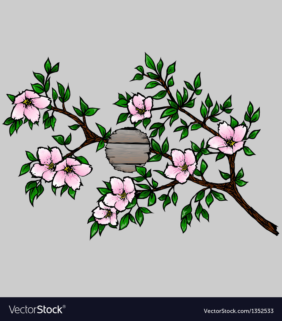 Branch with Cherry Blossoms vector image