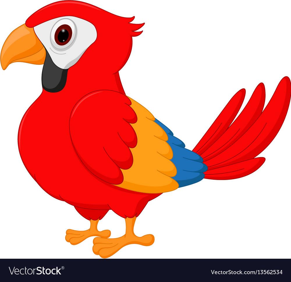 Macaw bird cartoon vector image