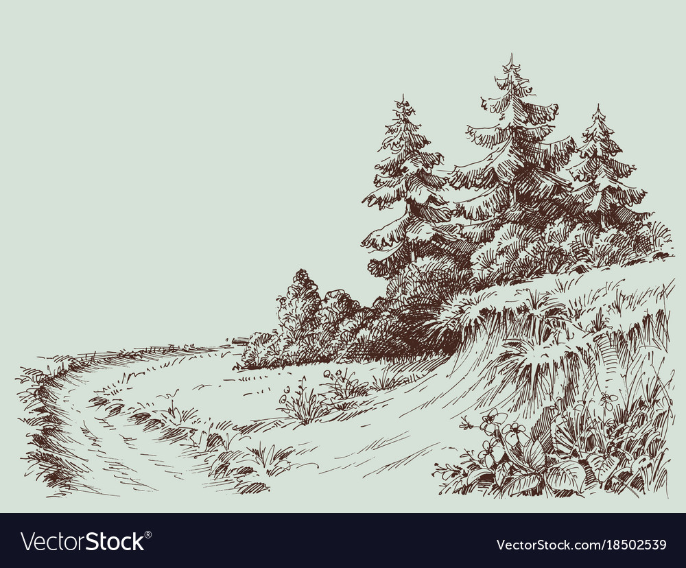 Nature drawing a path in the pine forest vector image