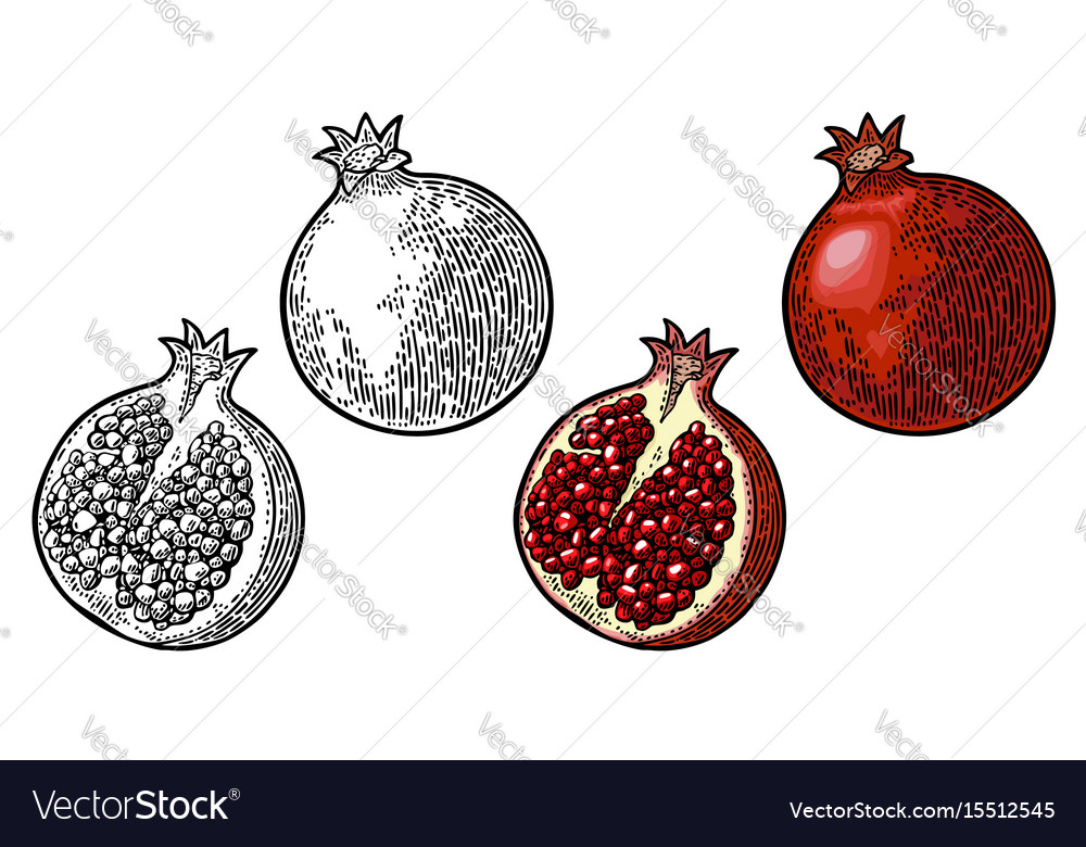 Whole and half garnet fruit with seed vector image